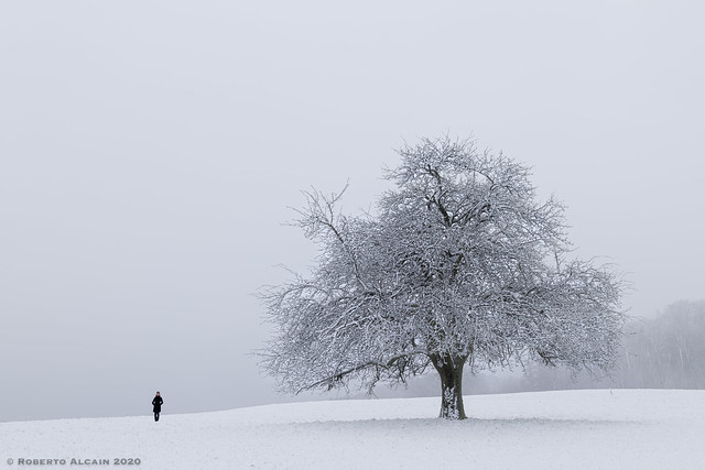 Woman and tree in the snow