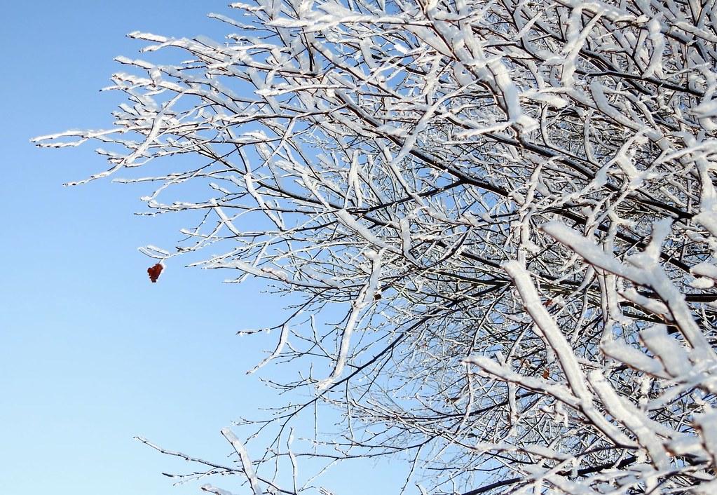 the last leaf on the tree