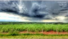 A tempestade e a cana de açúcar