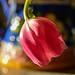 Pink Flower 1