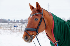 6th of January 2021 - Horse - VMF72827 - Essential - JPEG - Full size, highest quality(1)