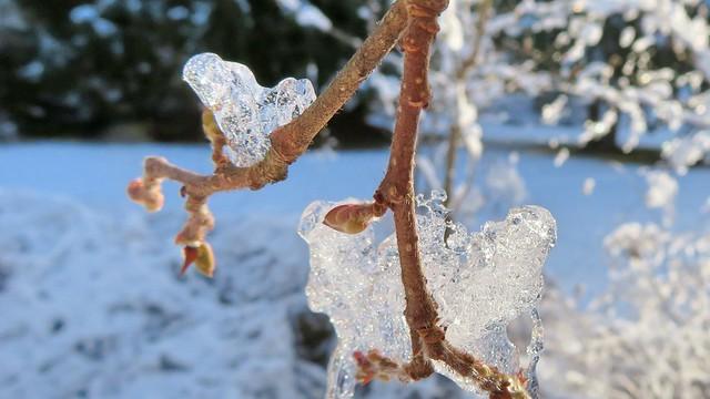 Snow Queen's Frozen Heart