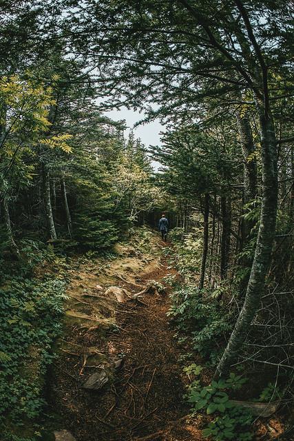 Woodsy Wander