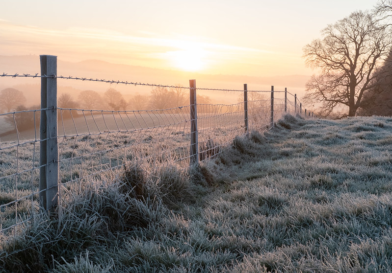 Photo of a fence made of wire between wooden fence posts, stretching diagonally into the distance, with frosty fields of grass on either side, and the rising sun casting an orange light over everything