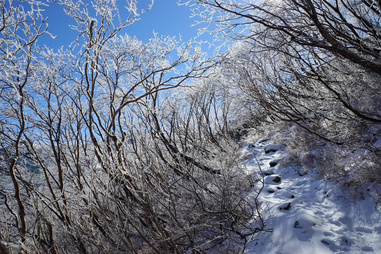 将棊頭山 霧氷のトンネルを行く雪山登山