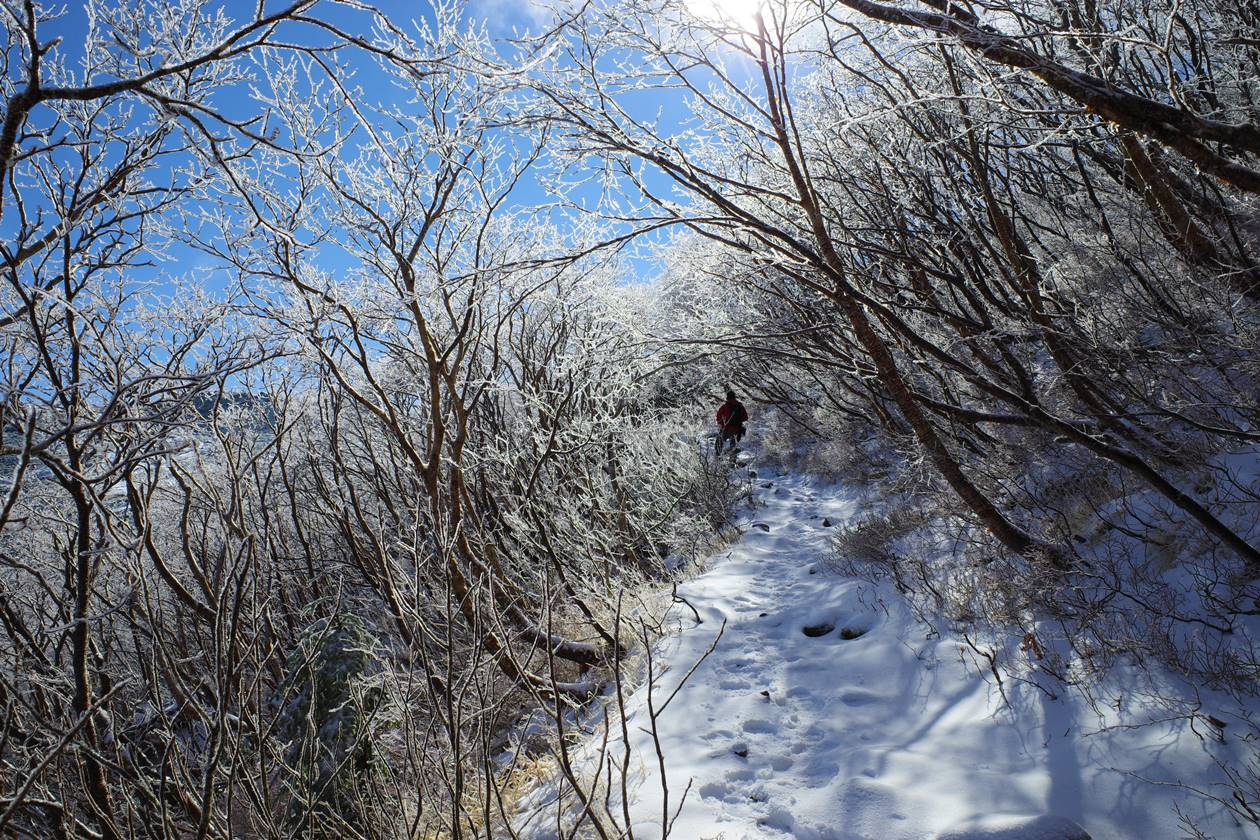 将棊頭山登山 霧氷のトンネル