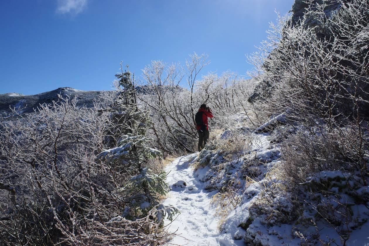将棊頭山 登山道の霧氷
