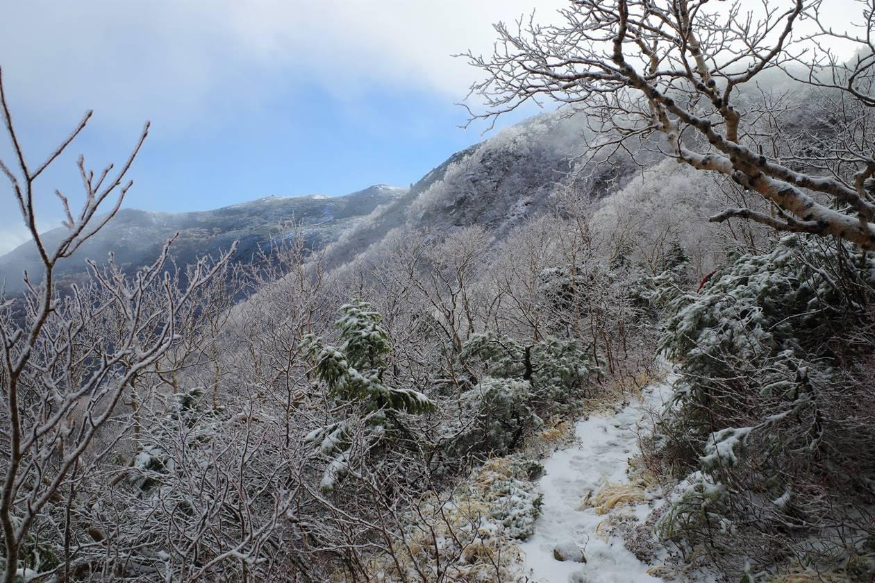 中央アルプス・将棊頭山 霧氷の登山道