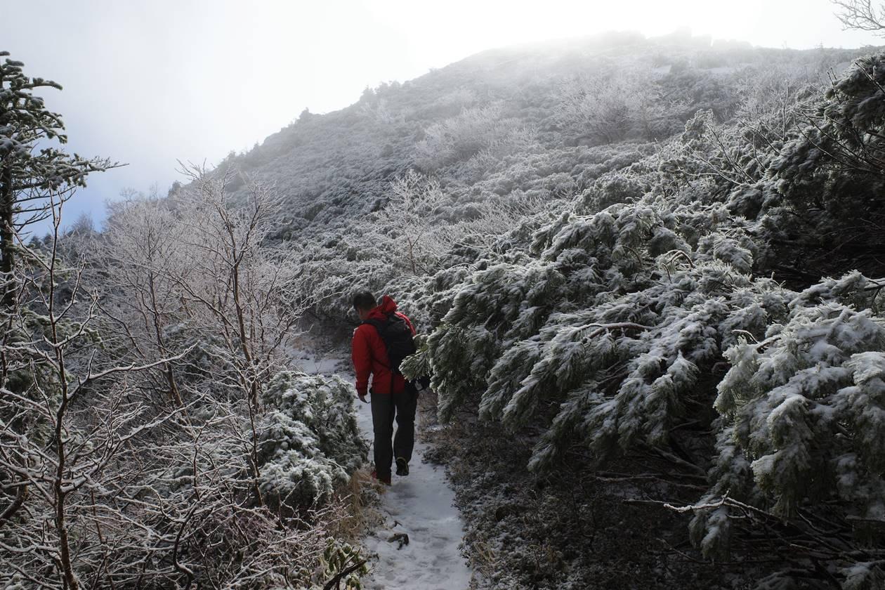 将棊頭山 夏道で山頂へ