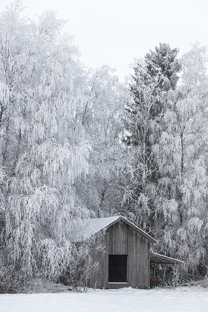 White is in the Winter Night........🎶. .Enya