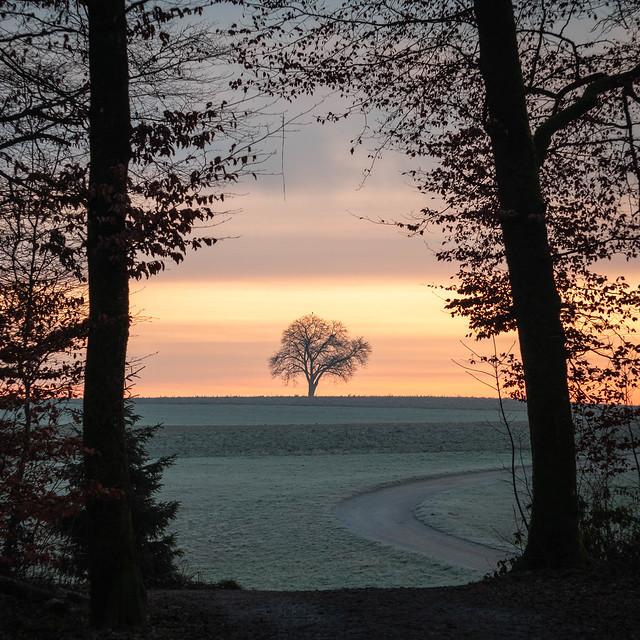 Tree Gate (Winter sunrise version)
