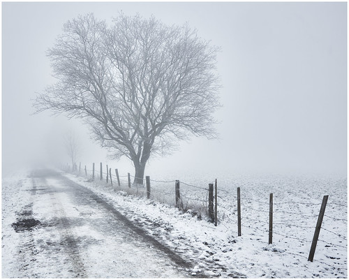 tree baum arbre fence zaun palisade weg chemin path mist fog nebel brouillard landschaft landscape paysage farbe couleur color outdoor fotorahmen canon5dmkiii canonef24105mmisf4 54 schnee snow neige