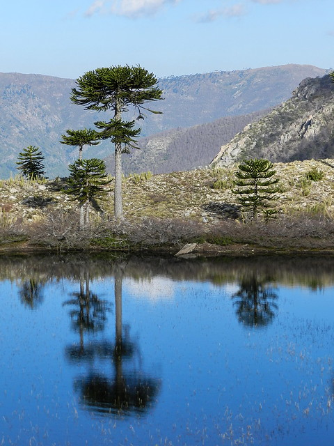 Cordillera de Pemehue