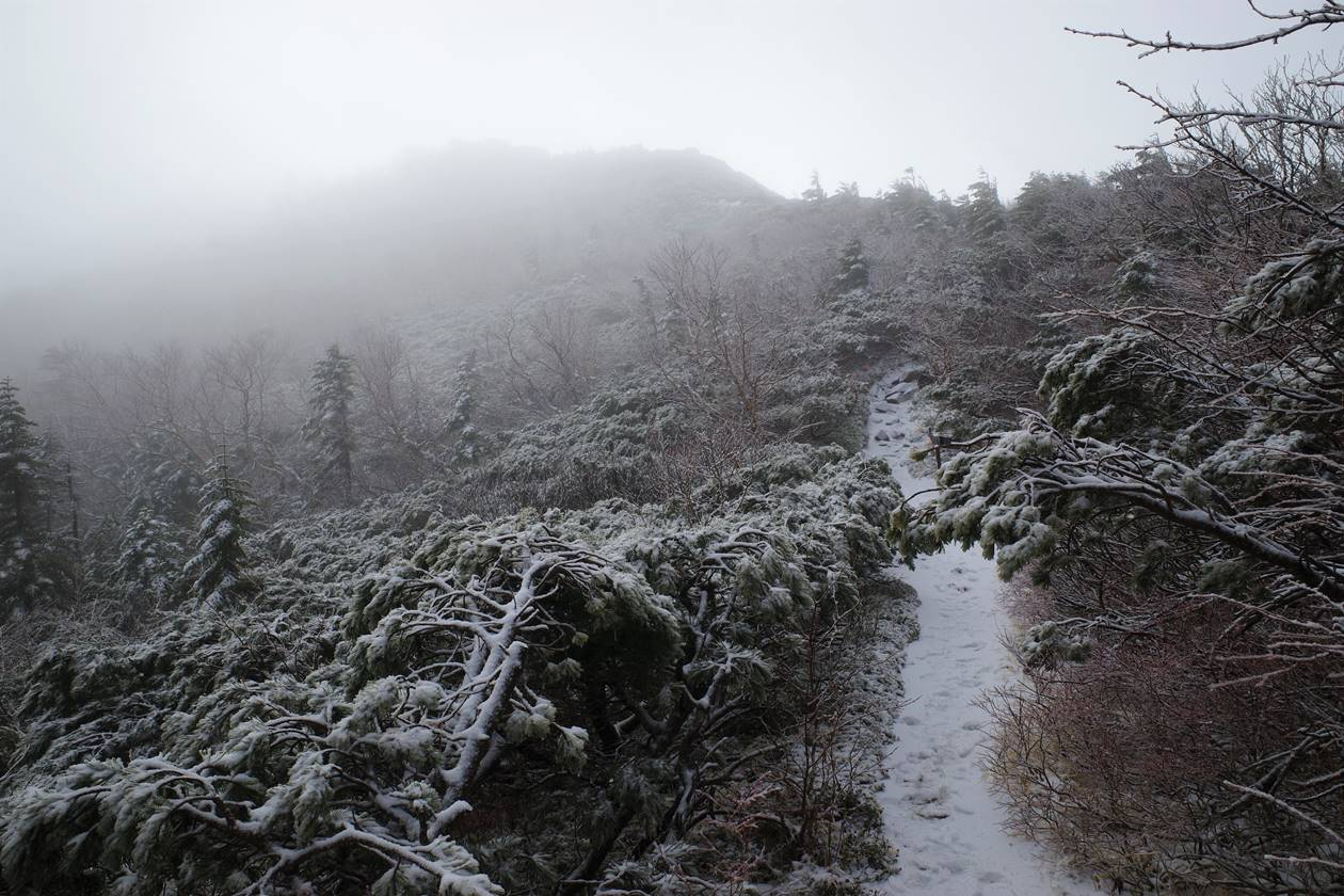 将棊頭山 霧と雪の稜線登山