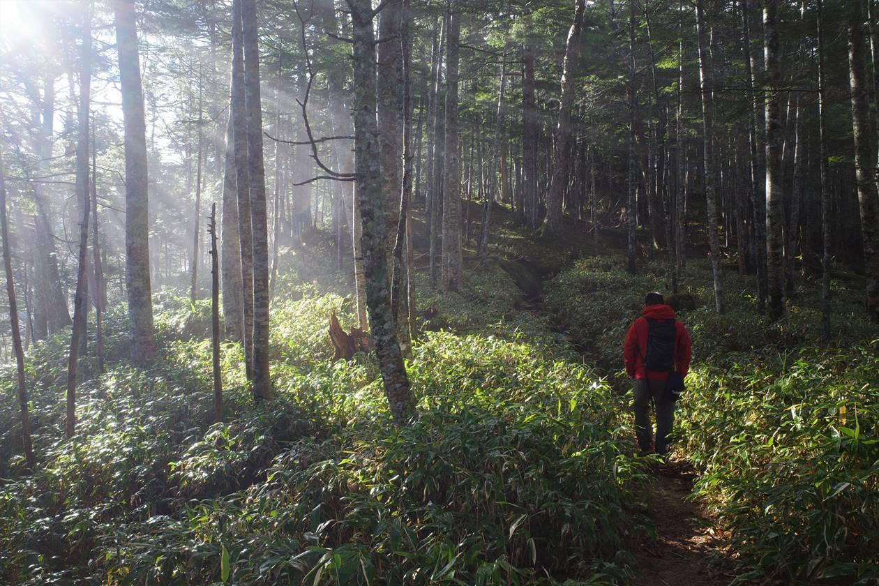将棊頭山 木漏れ日差す森