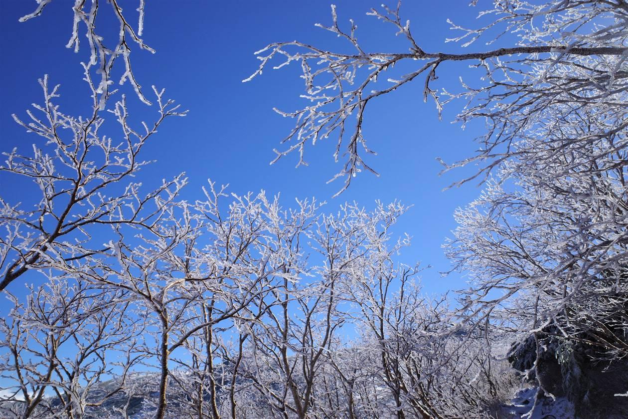将棊頭山の霧氷