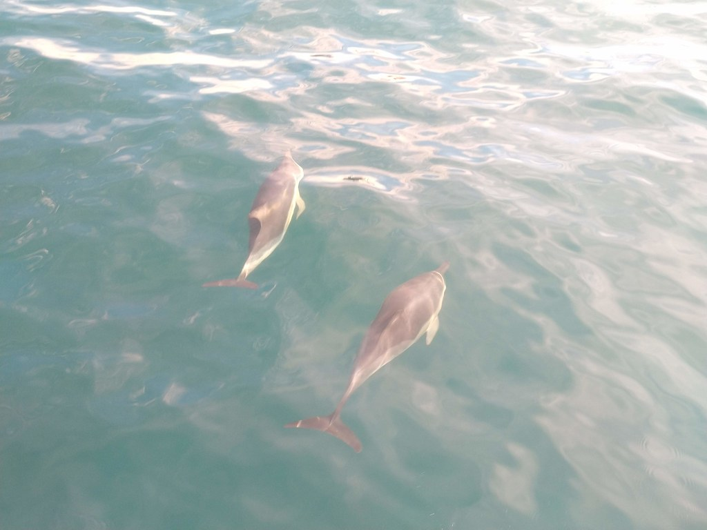 Dolphins spotted in the Strait of Gibraltar