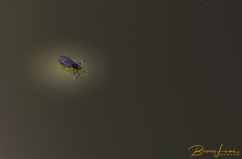 Fly on the water