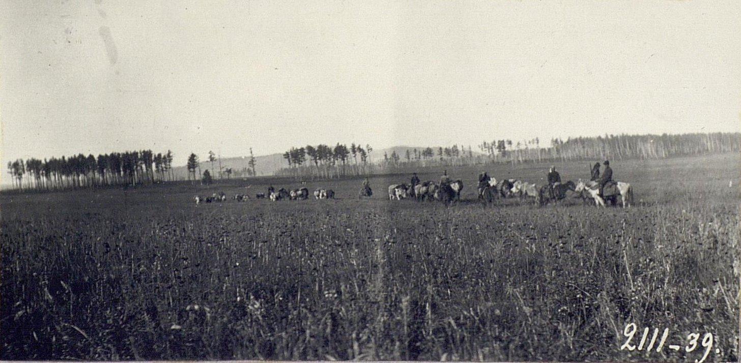 Ороченские «друзья» с вьючными лошадьми