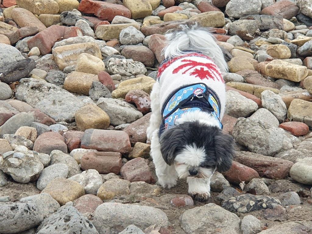 2021 01 01 Dog on the Rocks