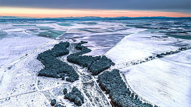 Snow over the crops