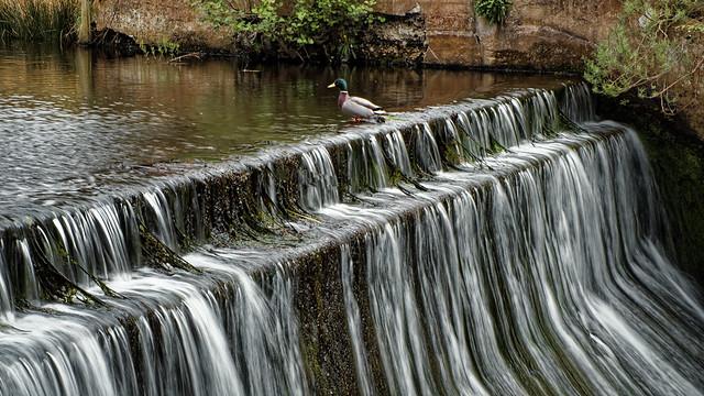 On the Weir