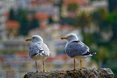 seagulls | by benderlepirate06