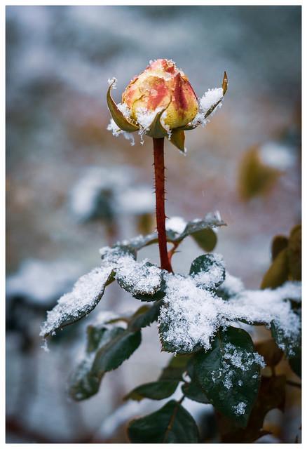 Voy a enamorarme del frío...a ver si también se aleja.