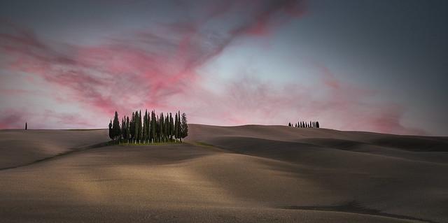 Toscana Cipressi