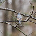 08 JAN 2021 - TUFTED TITMOUSE (2 of 1)-2