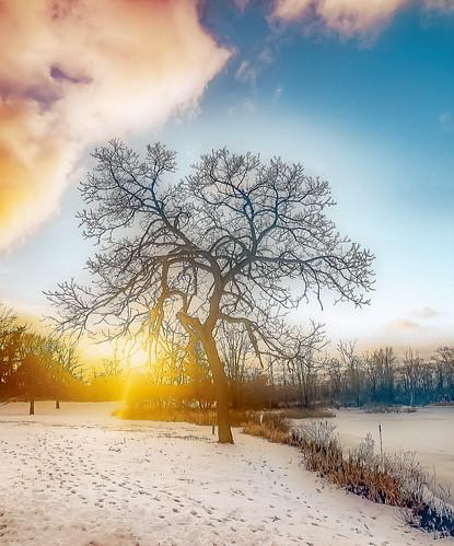sunset tree january winter lakeorion mi usa