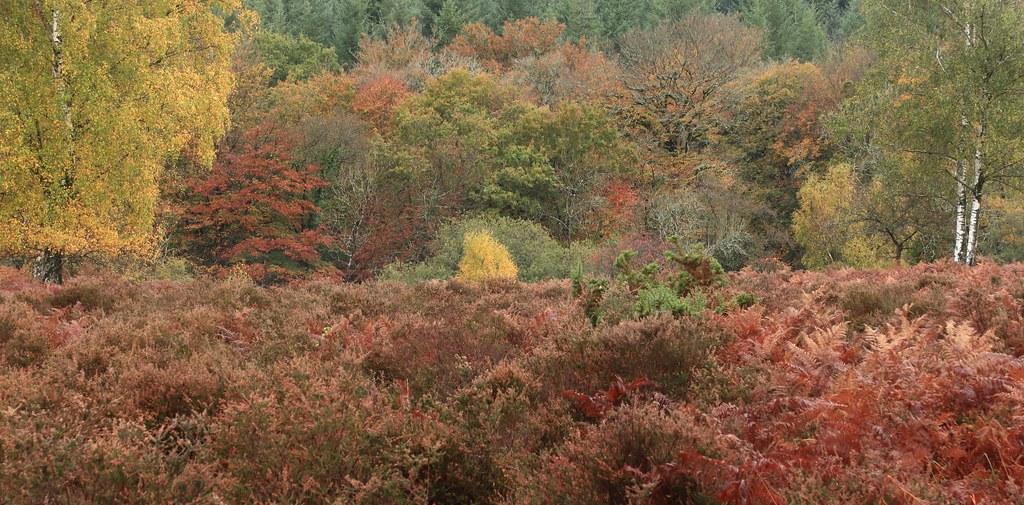Autumn Spectacle - 'Explored'