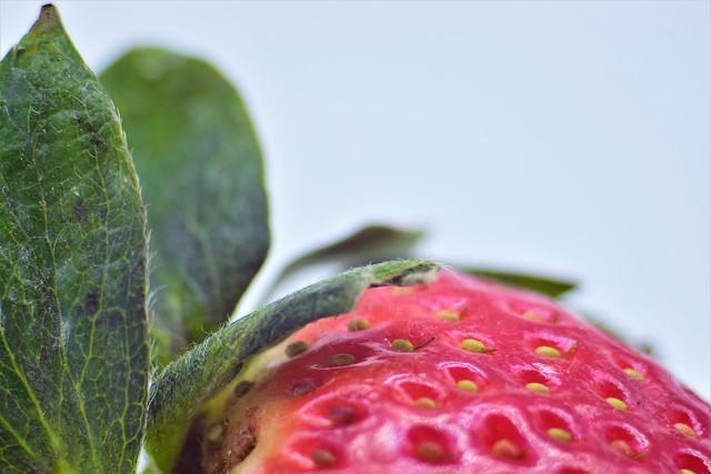 08/01.- 🎵...labios de fresa, sabor de amor...🎵🎶
