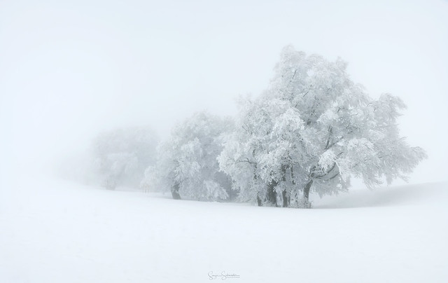 I love the simplicity of winter