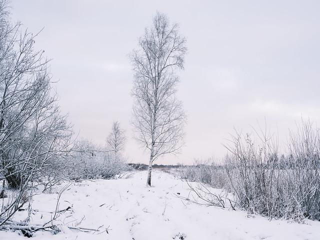 Tartumaa, Estonia, January 2021