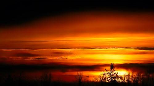 nature landscape sunset sundown crows cloud trees