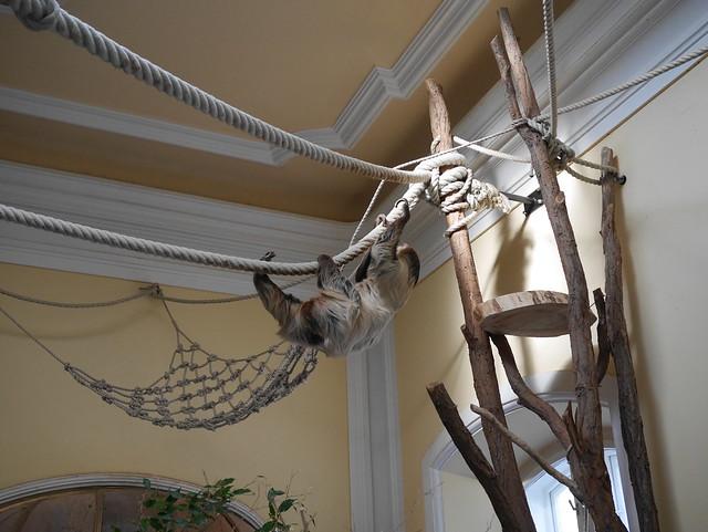 Sloth in the Schönbrunn (2)