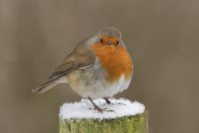 'Mr Grumpy!'