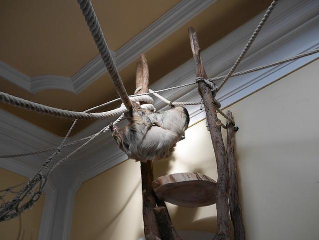 Sloth in the Schönbrunn