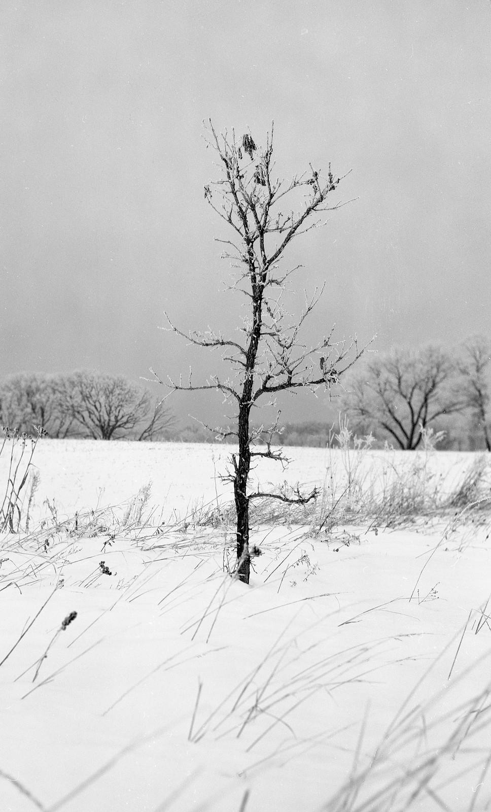 Frosty Morning Photos [Horseman 985 / Arista EDU Ultra 400 / Clayton F76+]