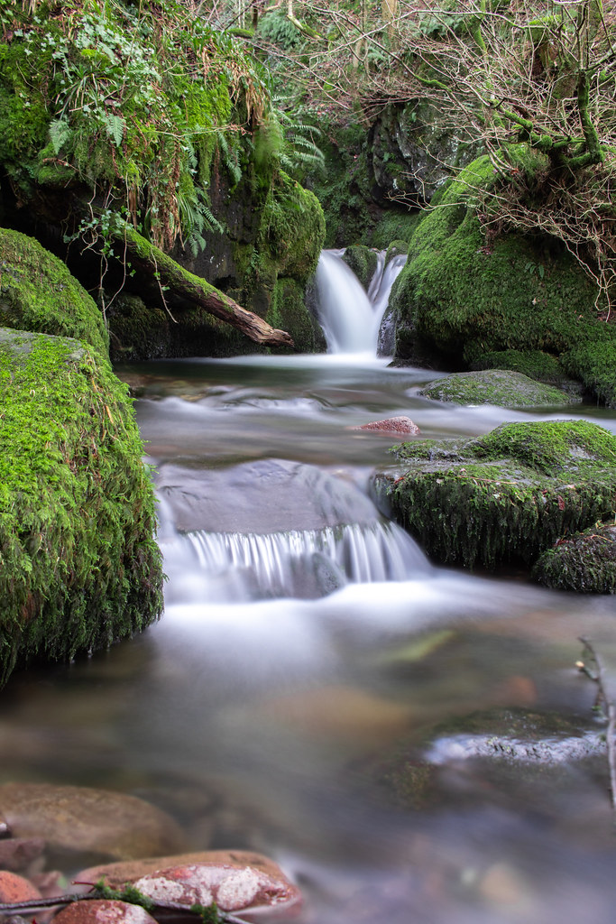 Mini waterfalls surrounded by Green Moss