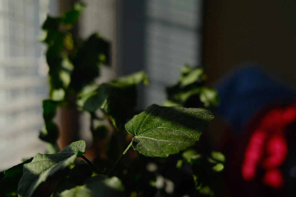 8/365 : The dusty potted plant
