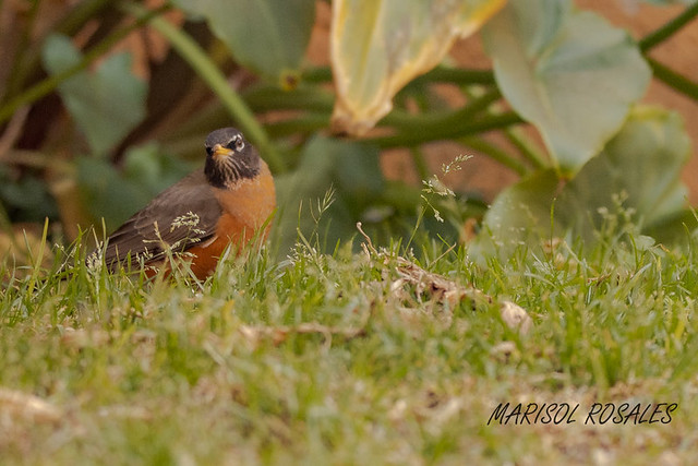 hermosa ave 1