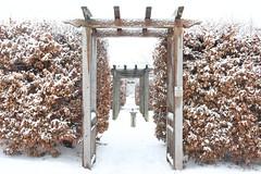 Winter chronicles