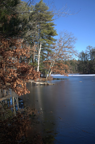 leaves fieldpond snow ice tree water lake pond massachusetts foliage winter cold reflection landscape blue