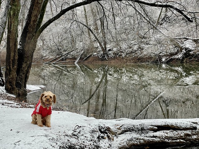 Winter in Indiana (6)