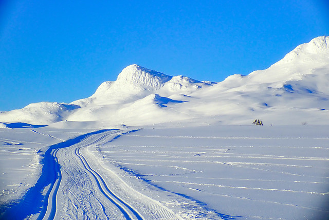 Cross-country skiing. Tuddal, Norway. In explore.