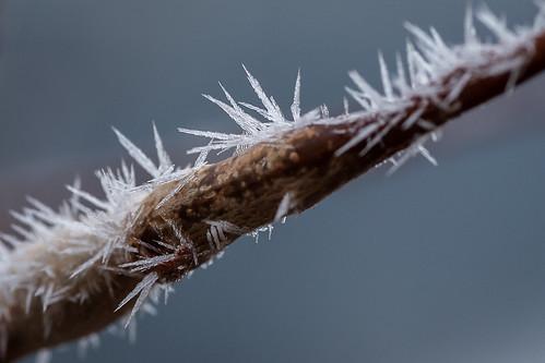 Spiky Hoar Frost