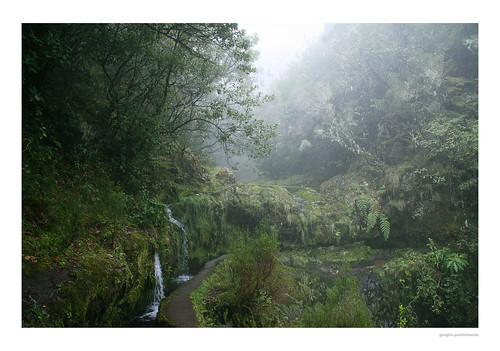 Levada walking in the mist