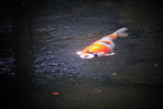 Spirit of the Pond
